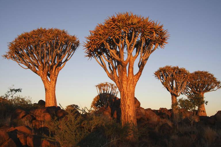 Zonsondergang in de Kalahari Desert