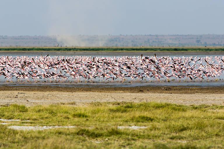 Flamingo's in Lake Manyara