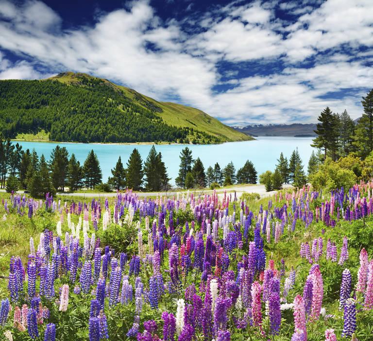 Nieuw-Zeeland, Lake Tekapo