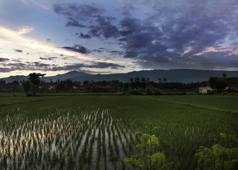 Omgeving Lovina, Bali