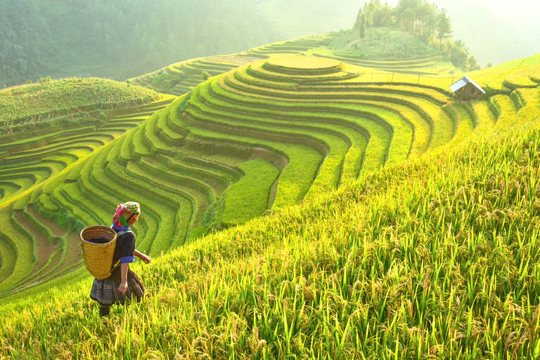 De terrassen in Mai Chau