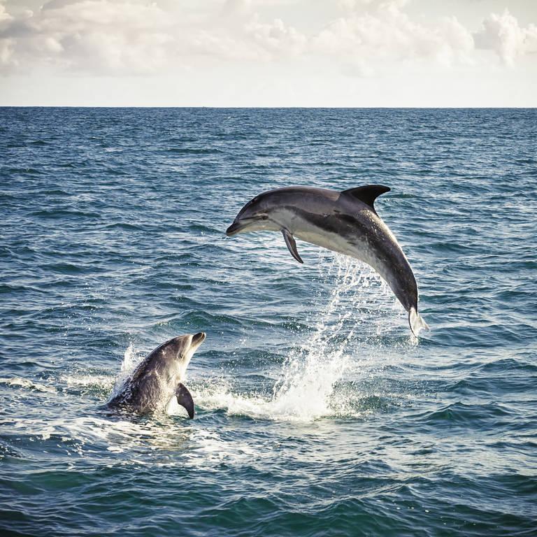 Dolfijnen in Bay of Islands