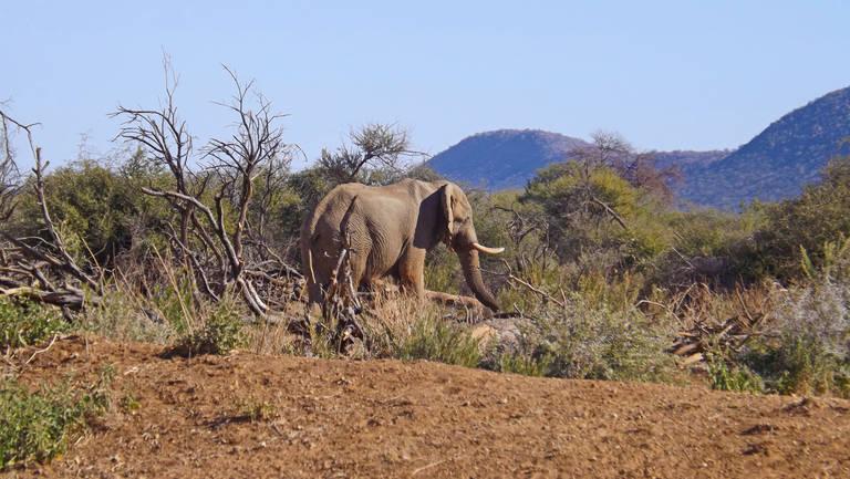 Olifant in Erindi Game Reserve