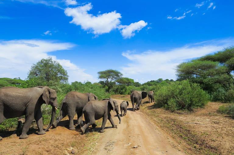 Olifanten in Lake Manyara National Park