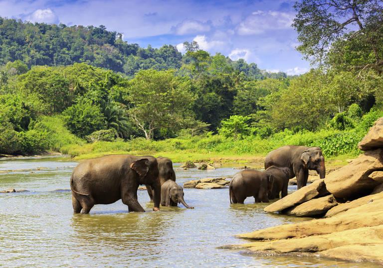 Olifantenfamilie in Yala National Park