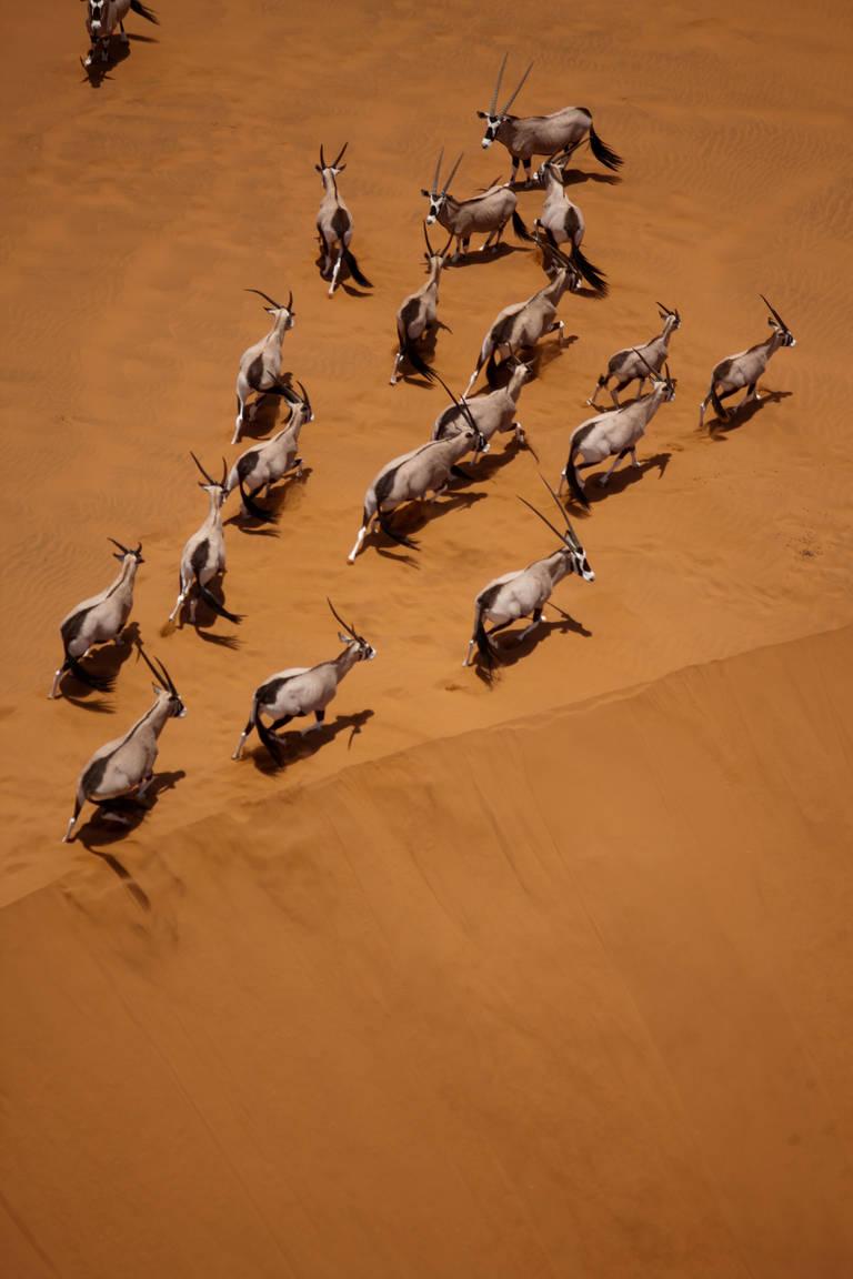 Oryx in de Sossusvlei