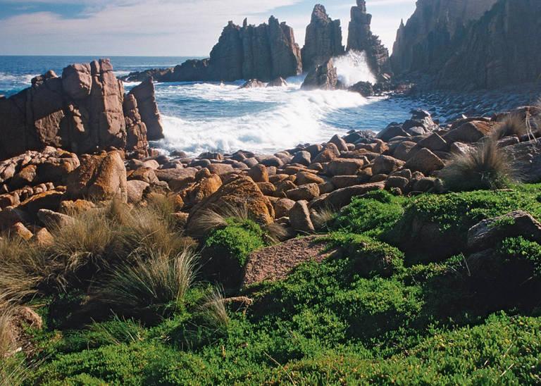 Rotsen, Phillip Island