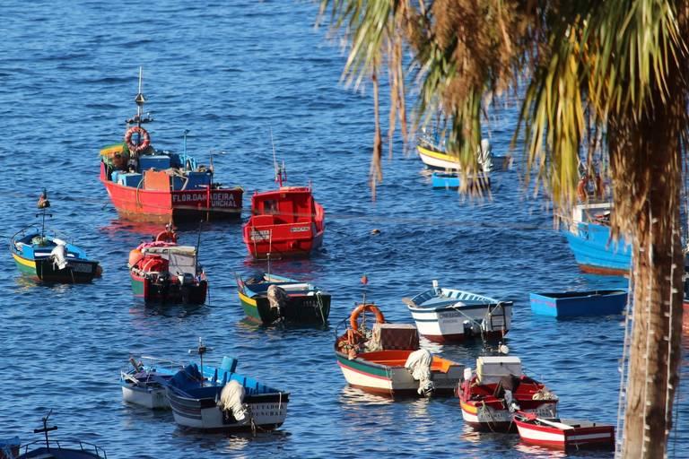 Boten in Funchal