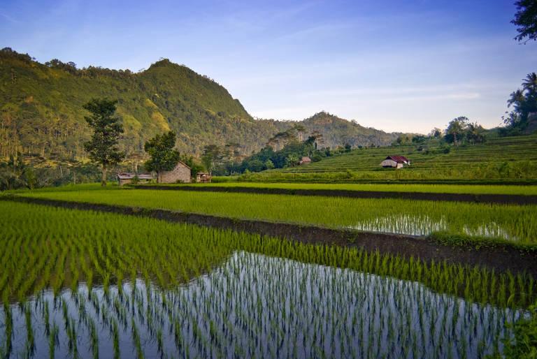 Rijstvelden Sidemen, Bali