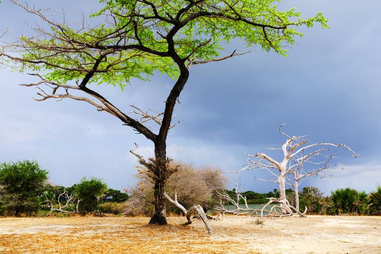 Landschap in Selous National Park