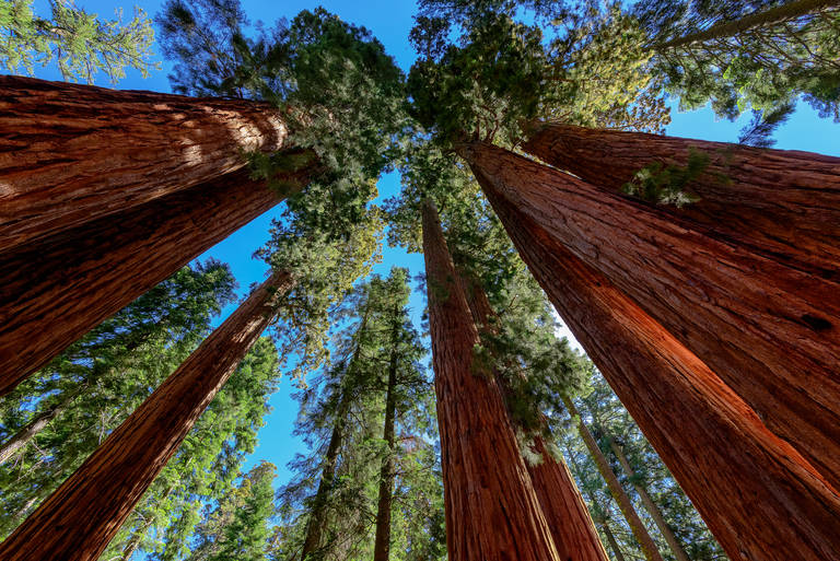 Sequoia Nationaal Park