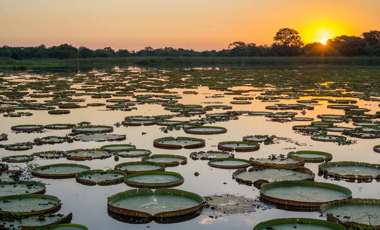 Zonsondergang op de Pantanal