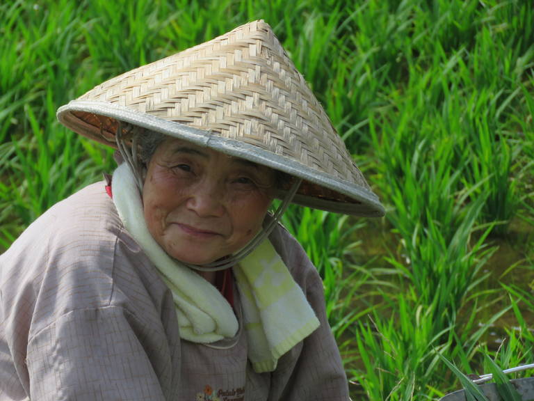 Rijstplukster in Takayama