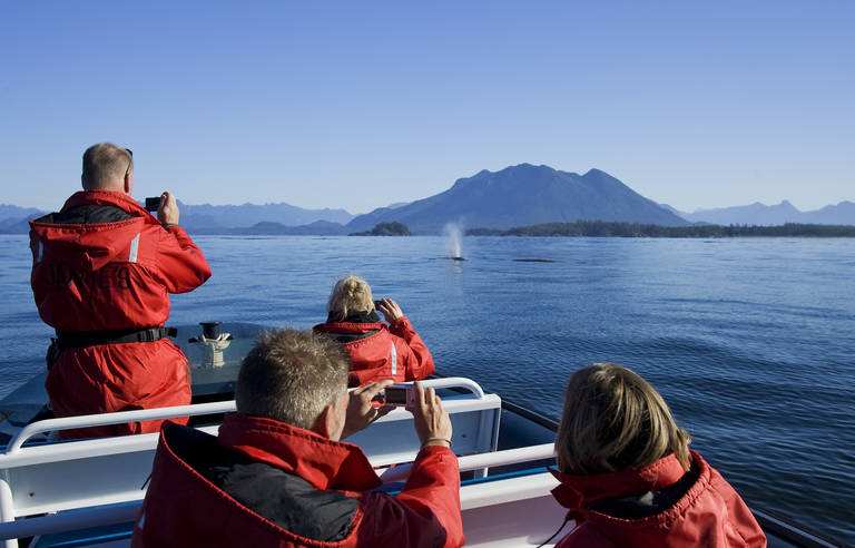Walvis excursie