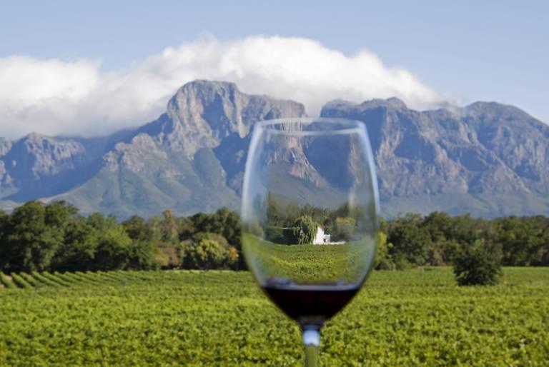 Wijnglas op een wijngaard in Stellenbosch