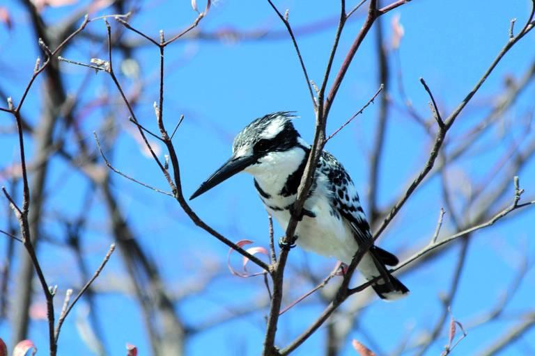 Vogel in de Caprivistrook