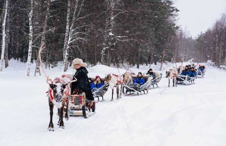 Rendier Slede in Rovaniemi, Fins Lapland