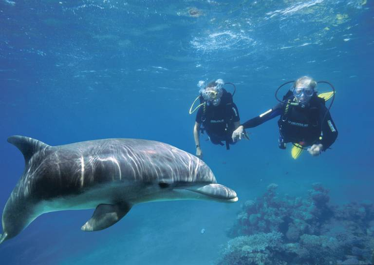 Dolfijnen bij Eilat