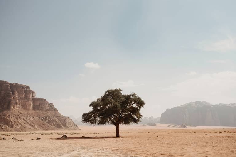 Landschap van Wadi Rum