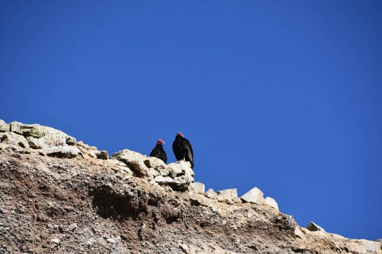 Roofvogels op Islas Ballestas