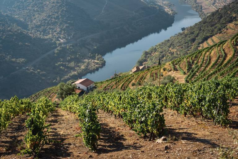 Wijnranken in de Douro vallei