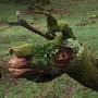 Dinas emrys dragon tree