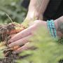 Digging carrots copy2