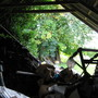 Looking thro gable end of the shed to trees  summer