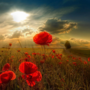Screenshot 2017 11 2 beautiful poppyfield freecomputerdesktopwallpaper 1680 jpg %28jpeg image  1680 %c3%97 1050 pixels%29   scaled %28 ...