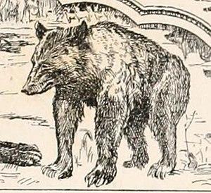 Dolls & Bears Genteel Brown 6 Inch Bearly Bear---