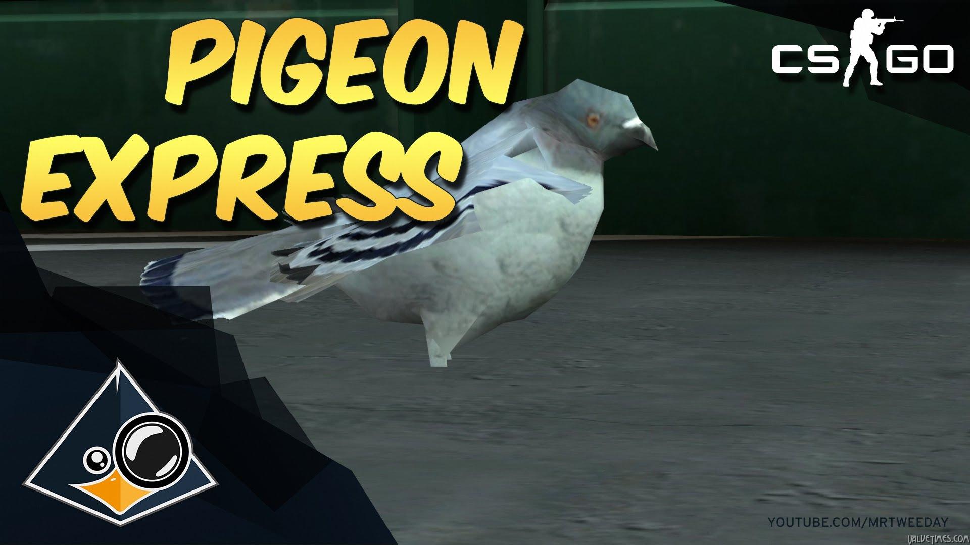 Катание на голубях