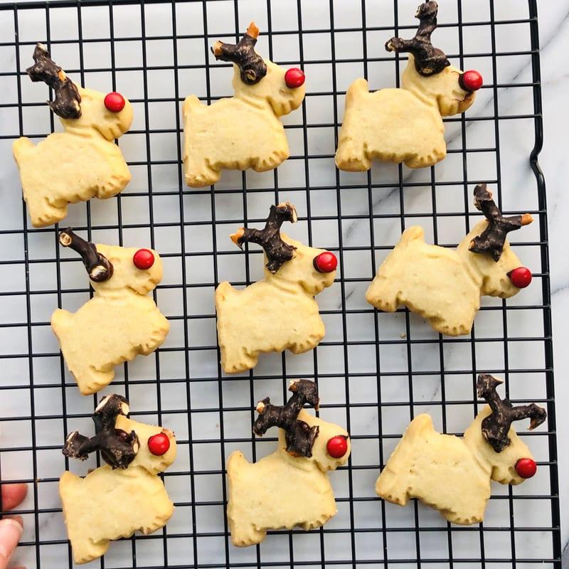 Scottie Reindeers