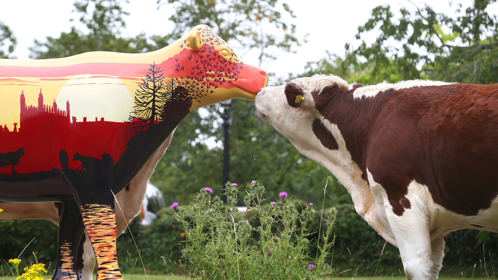 Wild in Art, Cows About Cambridge, 2020