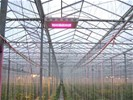 LED Kweeklamp / LED Growlight / LED Groeilampen