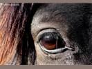Werken aan jezelf middels paarden