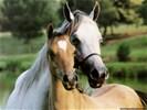 Ondersteun uw (huis)dier met bloesemremedies