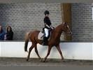 Verzorgpony/paard gezocht
