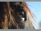 Therapie met paarden voor kinderen en volwassenen