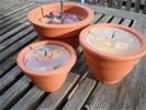 Citronella tuin kaarsen maken compleet