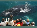 Whale Watching vanuit Dalvik