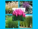 PLANTJES ZONDER BTW, 30, 31 JULI