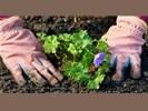 Wist u dat nazomer/najaar de beste planttijd is?