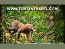 Tours en trips in Khao Yai nationaal park, Thailand