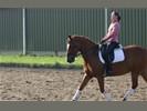 Te koop 6 jr sport , leer pony