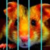 Midi-Théâtre 2/6 - Eward le hamster Brasserie de l'Inter Porrentruy Billets