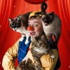 Clown and Cats Theater National Bern Tickets