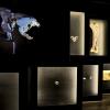 Das Erdzeitalter der Menschen Naturhistorisches Museum Bern Bern Biglietti