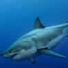 Der weisse Hai - Star statt Monster Volkshaus, Weisser Saal Zürich Biglietti