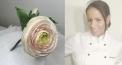 Rosely's Cake - Zuckerblume Ranunkeln