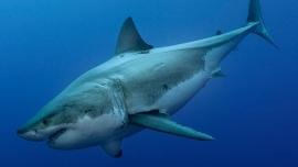 Der weisse Hai - Star statt Monster Volkshaus, Weisser Saal Zürich Tickets
